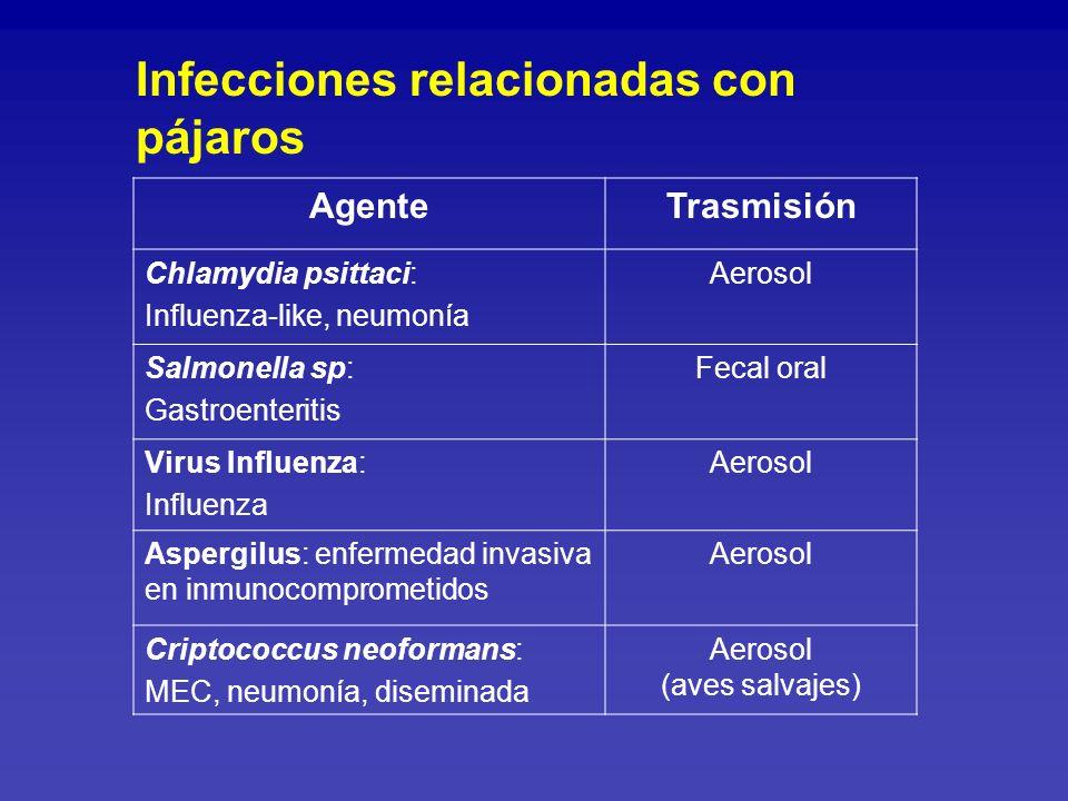 AgenteTrasmisión Virus Coriomeningitis linfocitaria: Hamster.