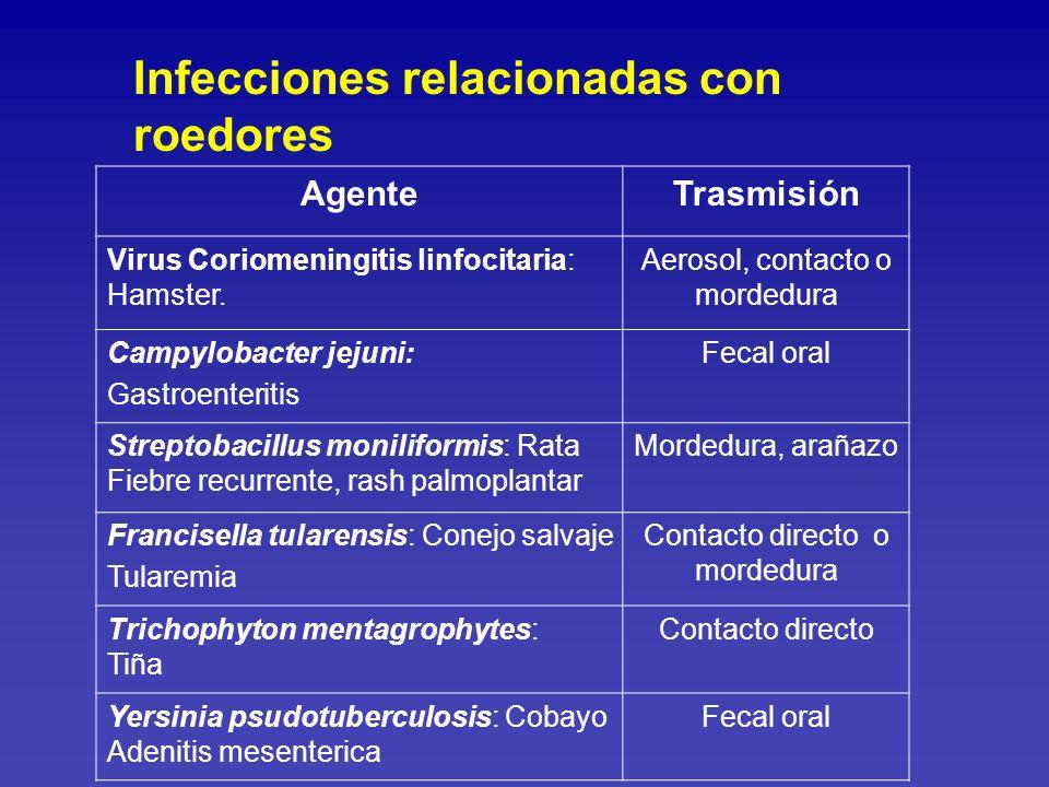 AgenteTrasmisión Salmonella sp: GastroenteritisFecal oral Edwardsiella sp: GastroenteritisFecal oral Plesiomonas sp: GastroenteritisFecal oral Infecciones relacionadas con reptiles