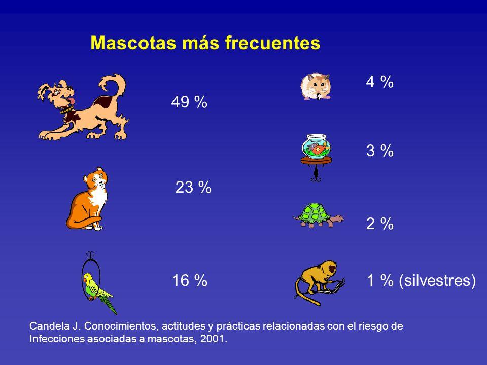 Infecciones Asociadas a Mascotas Vías de trasmisión: Mordedura y arañazo Fecal-oral Contacto Aerosoles Vectores