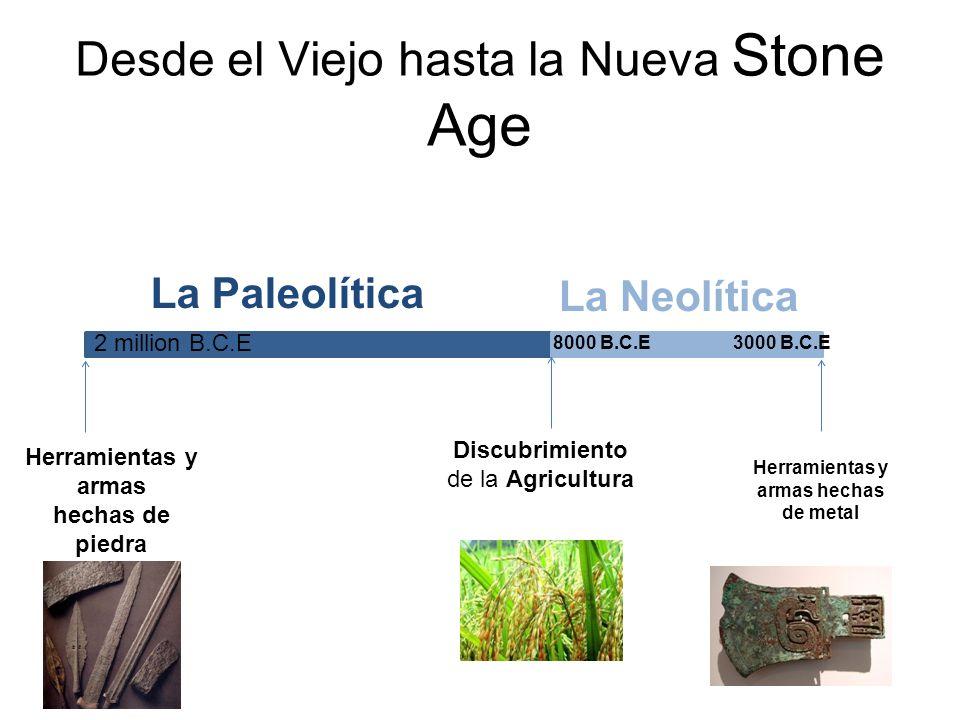 La Edad Neolítica La Revolución Neolítica– gran cambios fueron causados por el desarrollo de la sociedades agricultores.