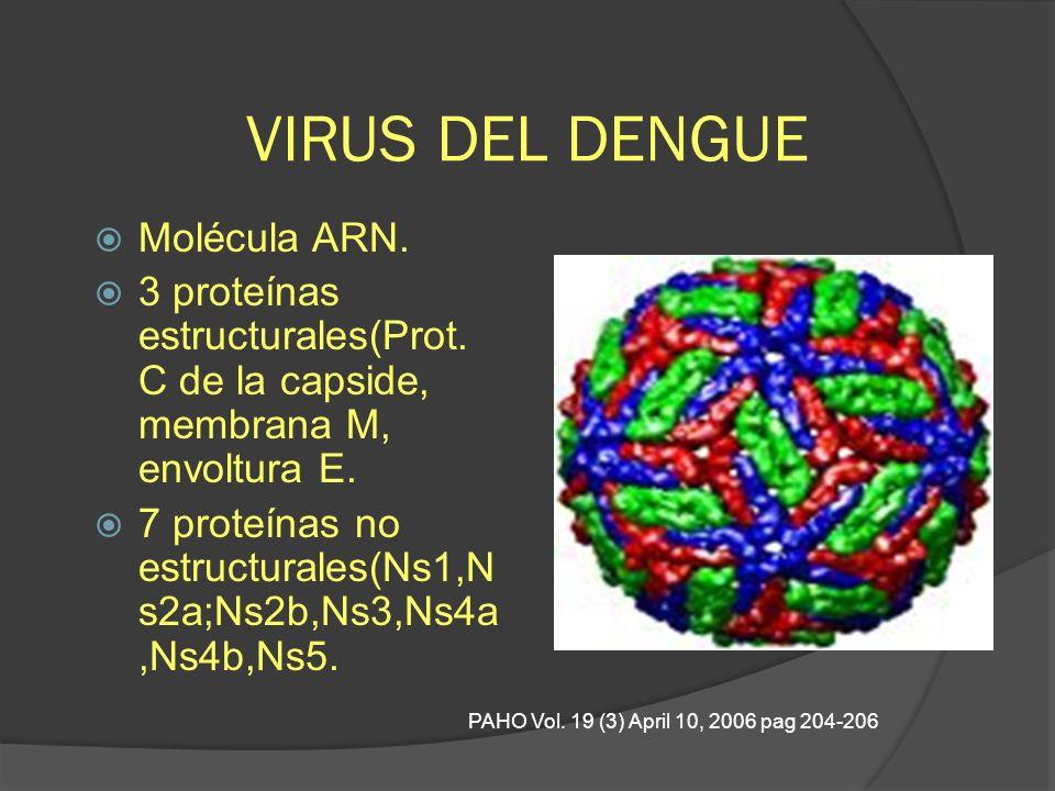 VIRUS DEL DENGUE Molécula ARN. 3 proteínas estructurales(Prot. C de la capside, membrana M, envoltura E. 7 proteínas no estructurales(Ns1,N s2a;Ns2b,N