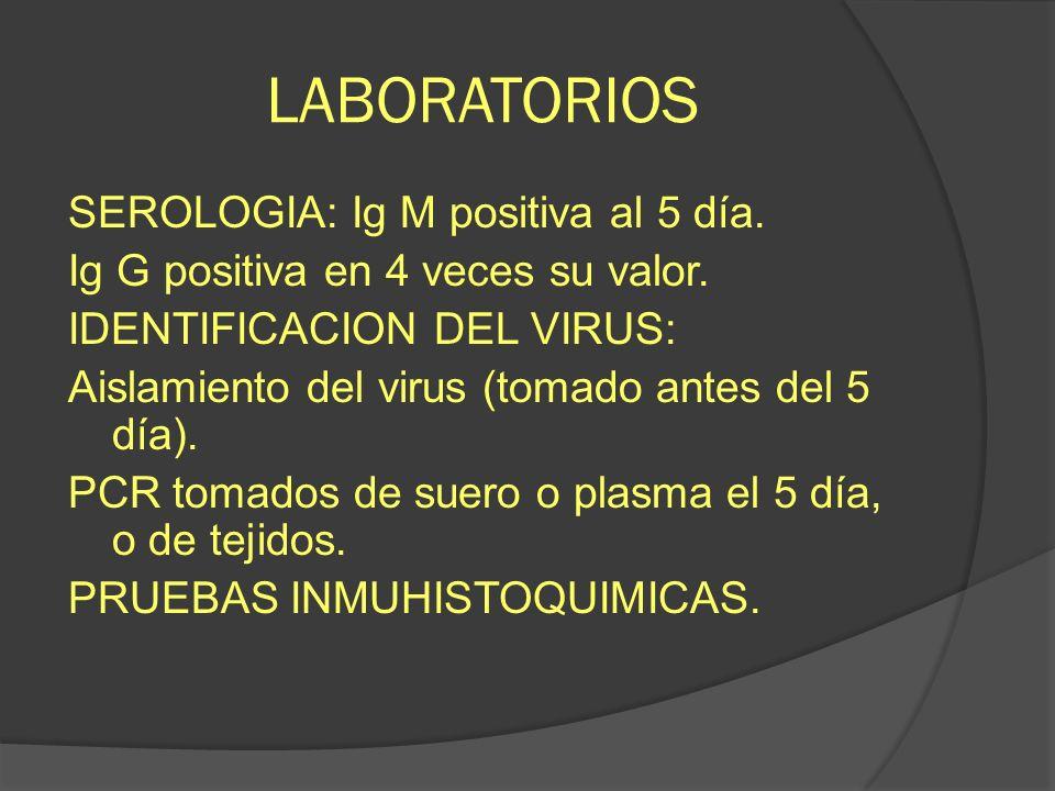 LABORATORIOS SEROLOGIA: Ig M positiva al 5 día. Ig G positiva en 4 veces su valor. IDENTIFICACION DEL VIRUS: Aislamiento del virus (tomado antes del 5