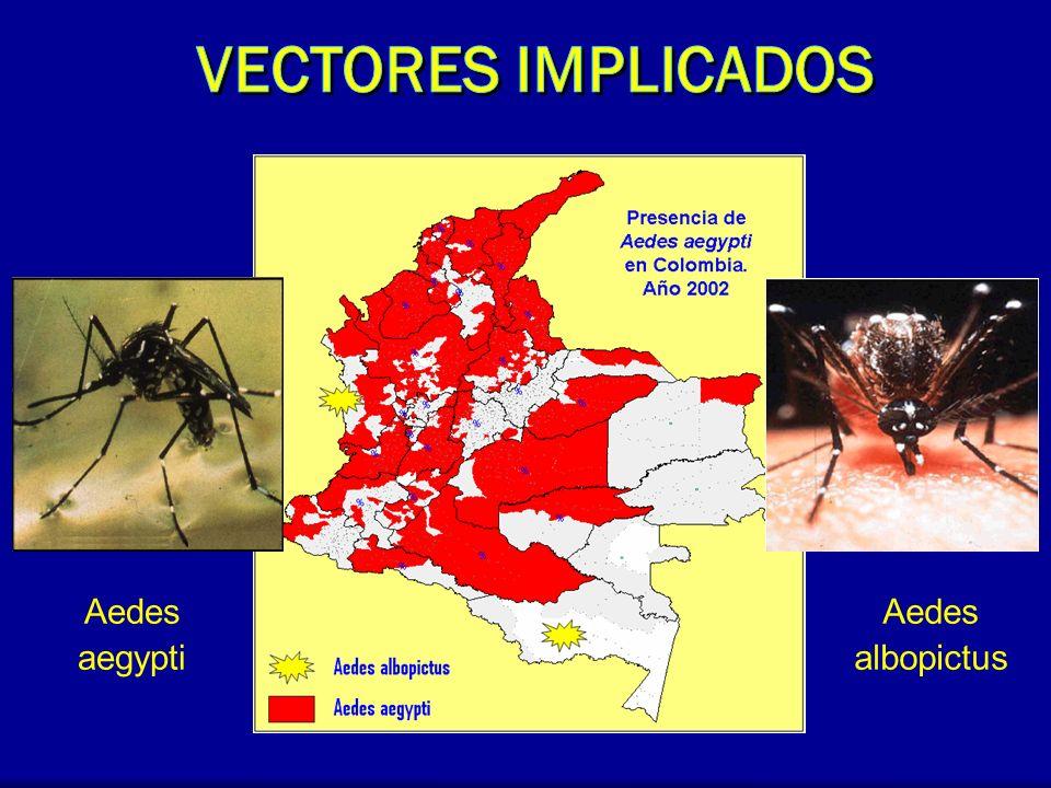 Aedes aegypti Aedes albopictus