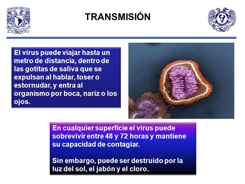 En cualquier superficie el virus puede sobrevivir entre 48 y 72 horas y mantiene su capacidad de contagiar. Sin embargo, puede ser destruido por la lu