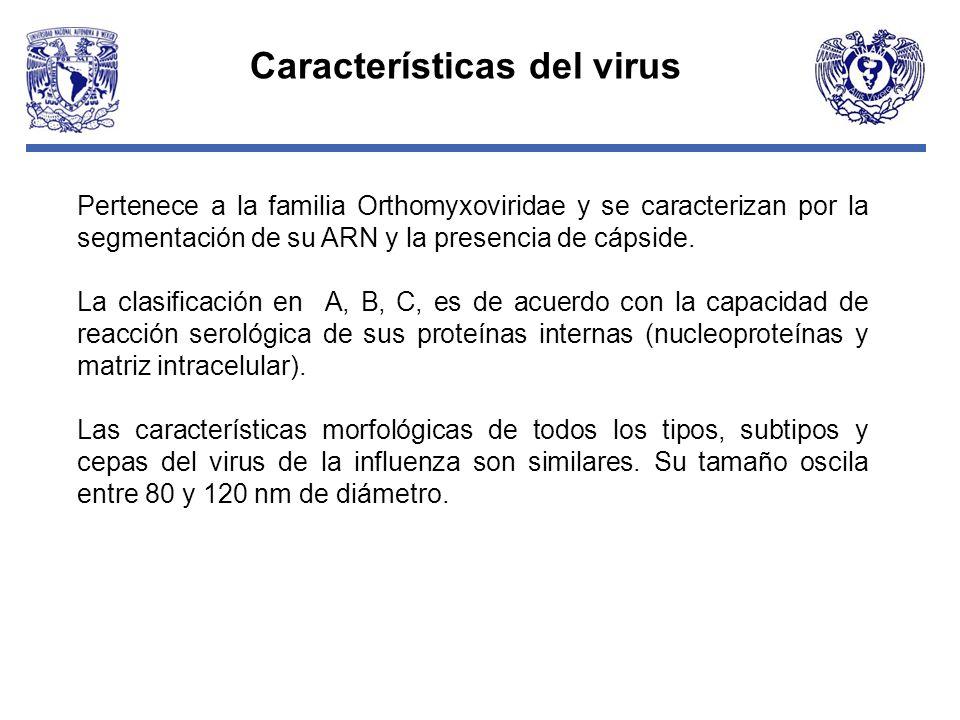 Pertenece a la familia Orthomyxoviridae y se caracterizan por la segmentación de su ARN y la presencia de cápside. La clasificación en A, B, C, es de