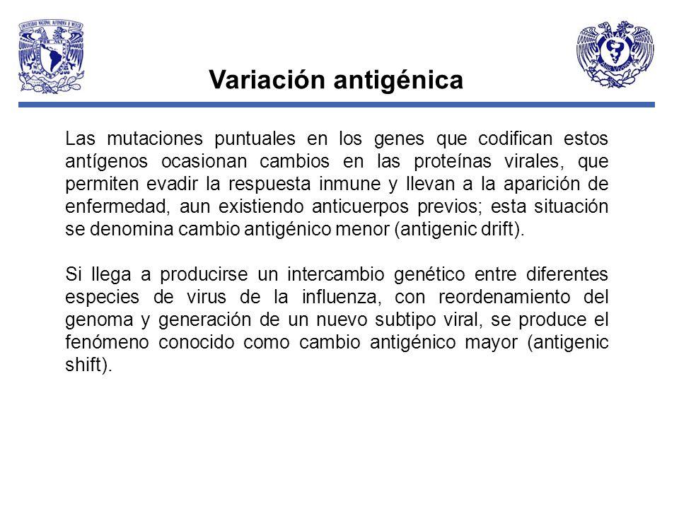 Canal Endémico de Infecciones respiratorias agudas, Nacional Para el grupo de edad : 15 a 49, hasta la semana 15 del 2009 (Probables) Fuente: Sistema Automatizado de Vigilancia Epidemiológica, DGAE.