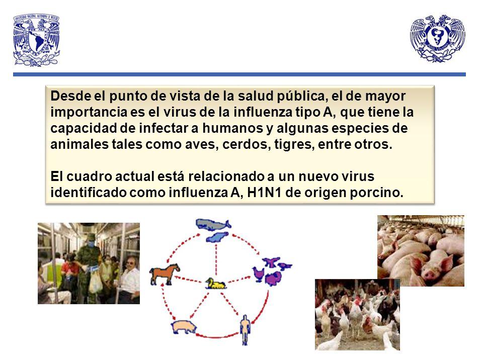 Desde el punto de vista de la salud pública, el de mayor importancia es el virus de la influenza tipo A, que tiene la capacidad de infectar a humanos