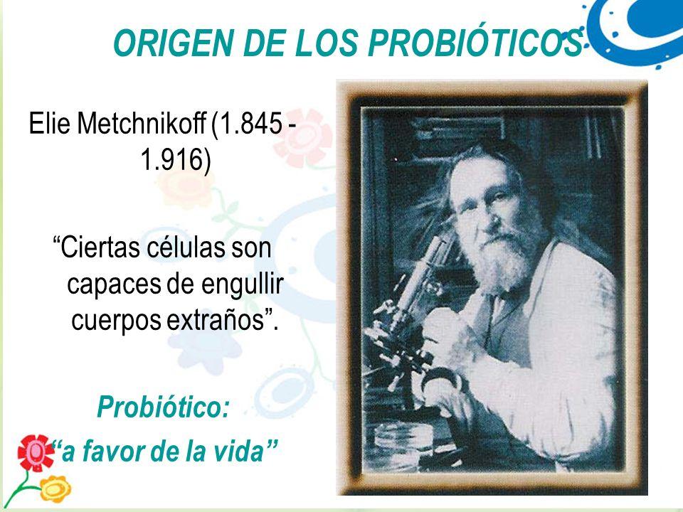 12 Elie Metchnikoff (1.845 - 1.916) Ciertas células son capaces de engullir cuerpos extraños. Probiótico: a favor de la vida ORIGEN DE LOS PROBIÓTICOS