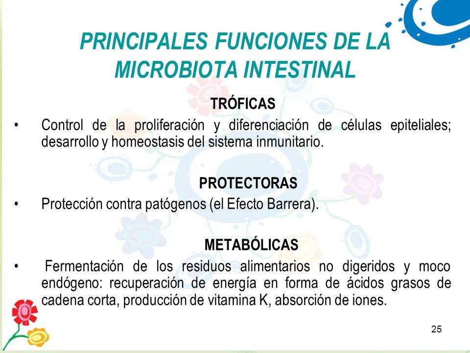 25 TRÓFICAS Control de la proliferación y diferenciación de células epiteliales; desarrollo y homeostasis del sistema inmunitario. PROTECTORAS Protecc