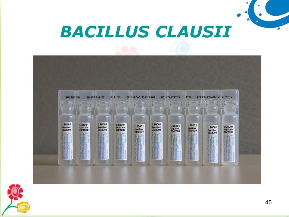 45 BACILLUS CLAUSII