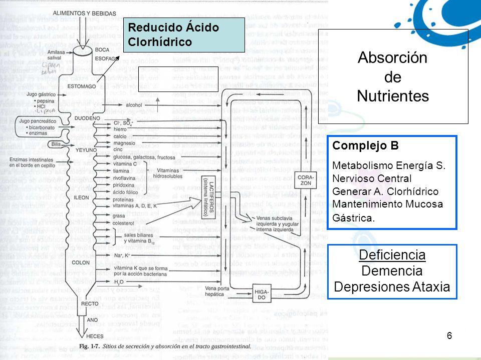 6 Absorción de Nutrientes Biotina Colina- neurotransmisor Acetilcolina Complejo B Metabolismo Energía S. Nervioso Central Generar A. Clorhídrico Mante