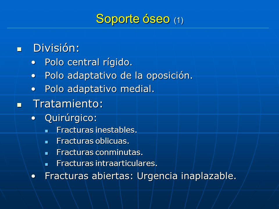 Soporte óseo (1) División: División: Polo central rígido.Polo central rígido. Polo adaptativo de la oposición.Polo adaptativo de la oposición. Polo ad