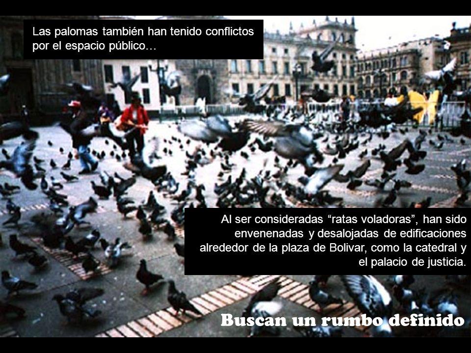 Buscan un rumbo definido Las palomas también han tenido conflictos por el espacio público… Al ser consideradas ratas voladoras, han sido envenenadas y