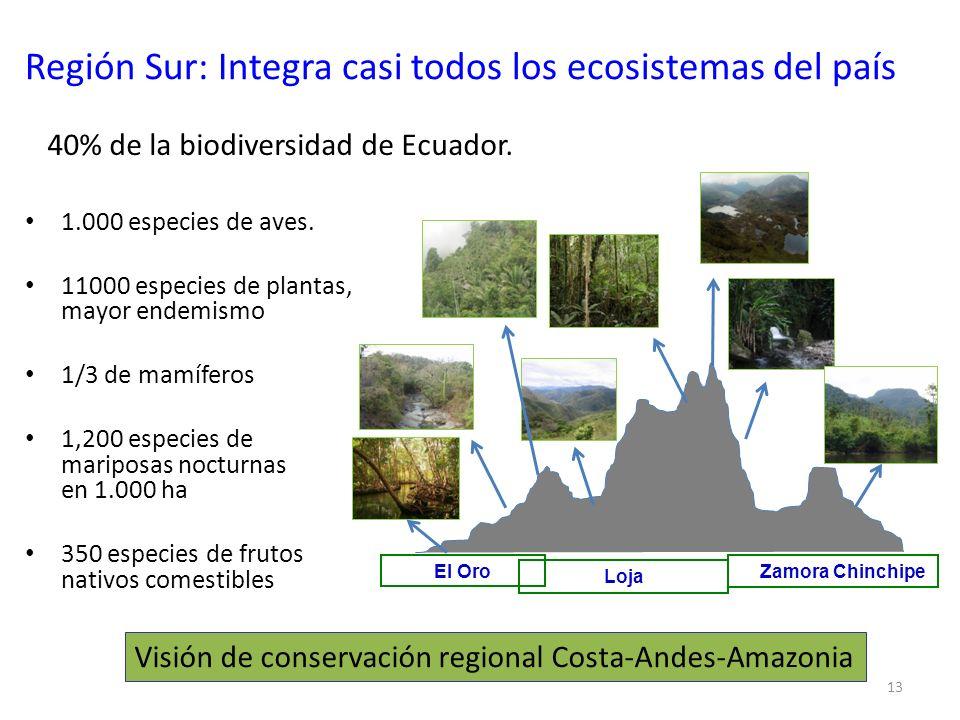 13 Región Sur: Integra casi todos los ecosistemas del país 1.000 especies de aves. 11000 especies de plantas, mayor endemismo 1/3 de mamíferos 1,200 e