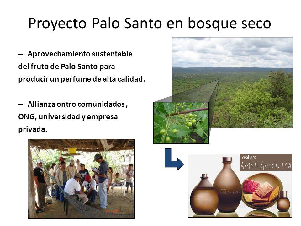 Proyecto Palo Santo en bosque seco – Aprovechamiento sustentable del fruto de Palo Santo para producir un perfume de alta calidad. – Allianza entre co