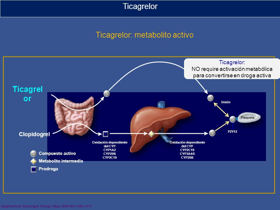 Adapted from Schomig A. N Engl J Med. 2009;361:1108–1111. Ticagrelor Ticagrelor: metabolito activo Ticagrelor: NO require activación metabólica para c