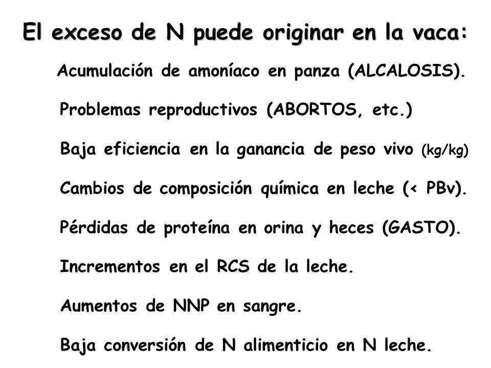 El exceso de N puede originar en la vaca: Acumulación de amoníaco en panza (ALCALOSIS). Problemas reproductivos (ABORTOS, etc.) Baja eficiencia en la