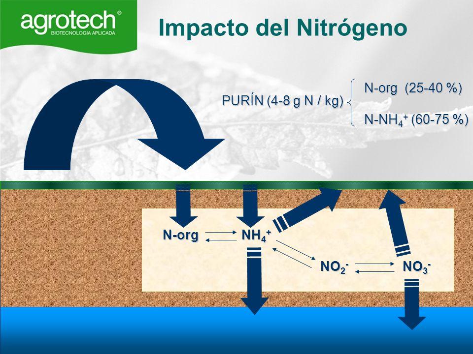 PURÍN (4-8 g N / kg) N-org (25-40 %) N-NH 4 + (60-75 %) N-org NH 4 + NO 2 - NO 3 - Impacto del Nitrógeno