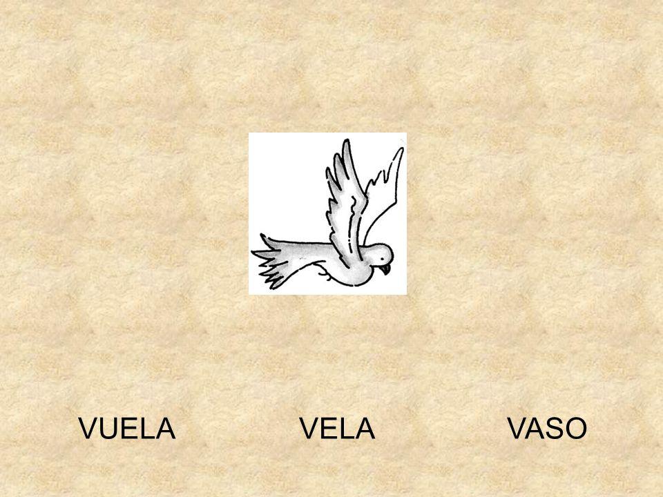VASOVUELA