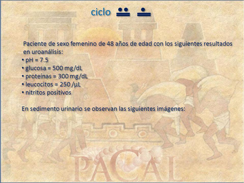 ciclo Paciente de sexo femenino de 48 años de edad con los siguientes resultados en uroanálisis: pH = 7.5 glucosa = 500 mg/dL proteínas = 300 mg/dL le