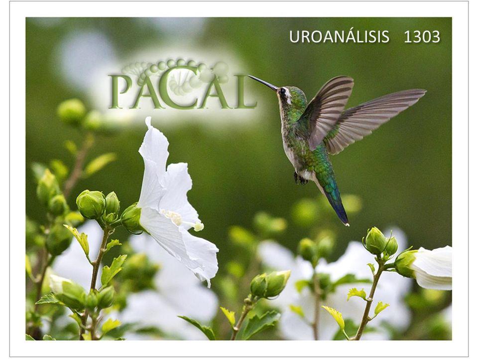 UROANÁLISIS 1303