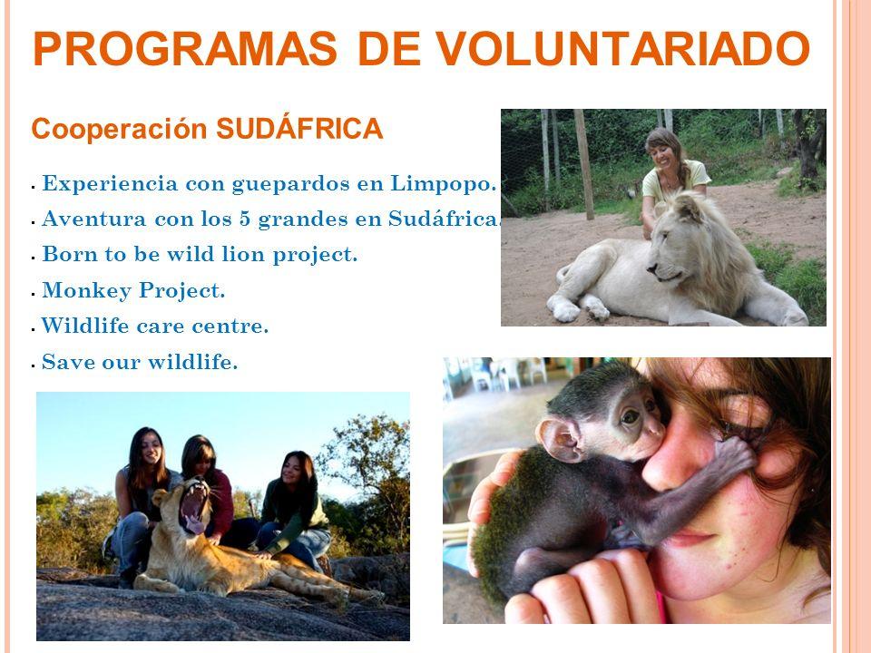 Cooperación SUDÁFRICA Experiencia con guepardos en Limpopo. Aventura con los 5 grandes en Sudáfrica. Born to be wild lion project. Monkey Project. Wil