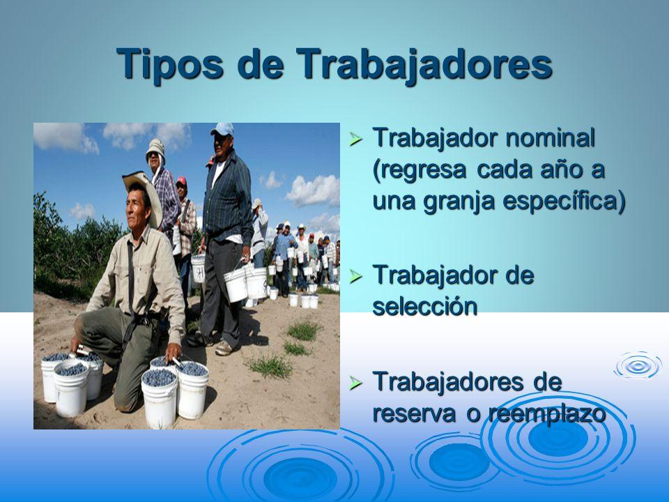 Tipos de Trabajadores Trabajador nominal (regresa cada año a una granja específica) Trabajador nominal (regresa cada año a una granja específica) Trab