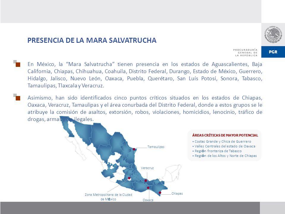 PRESENCIA DE LA MARA SALVATRUCHA Tamaulipas Zona Metropolitana de la Ciudad de M é xico Oaxaca Veracruz Chiapas En México, la Mara Salvatrucha tienen
