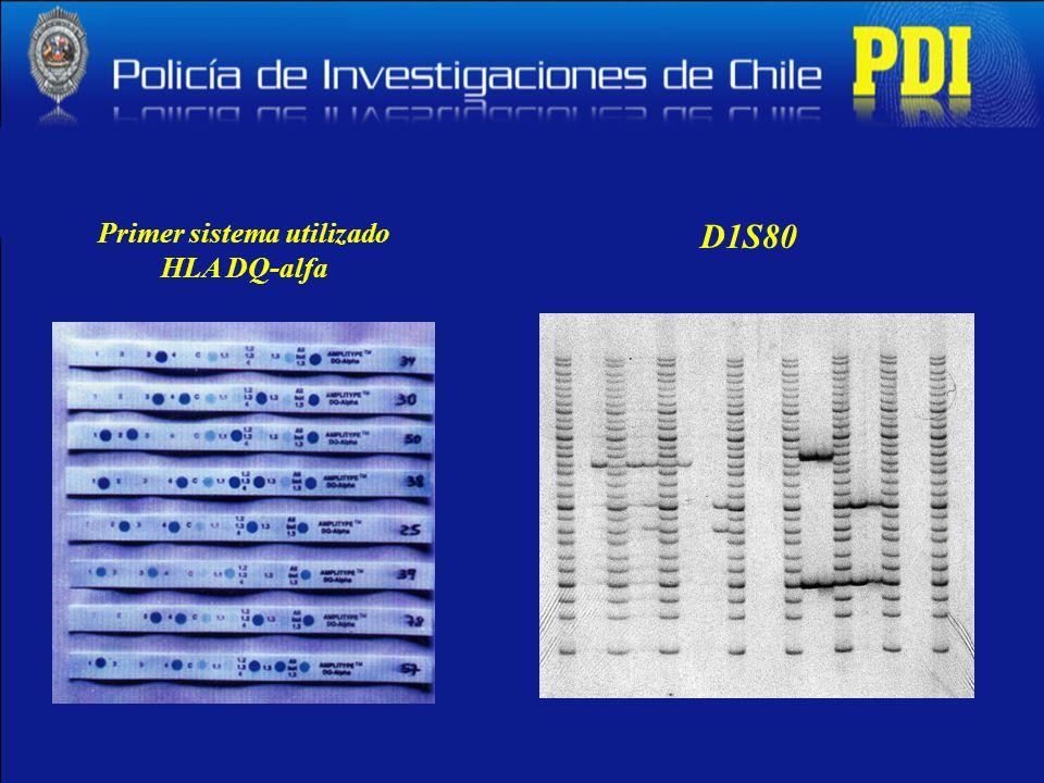 Primer sistema utilizado HLA DQ-alfa D1S80