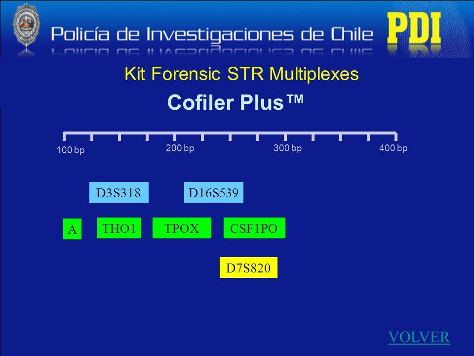 100 bp 400 bp300 bp200 bp Kit Forensic STR Multiplexes VOLVER Cofiler Plus D7S820 D3S318 A D16S539 THO1TPOXCSF1PO