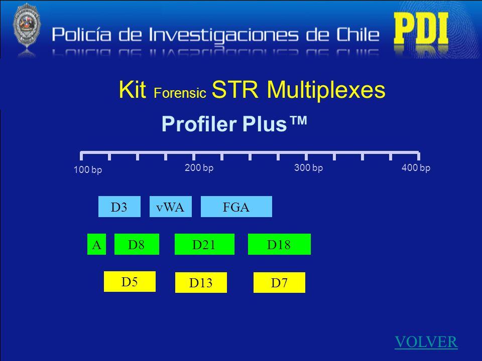 100 bp 400 bp300 bp200 bp D13 D3 A FGAvWA D8D21D18 D5 D7 Profiler Plus Kit Forensic STR Multiplexes VOLVER