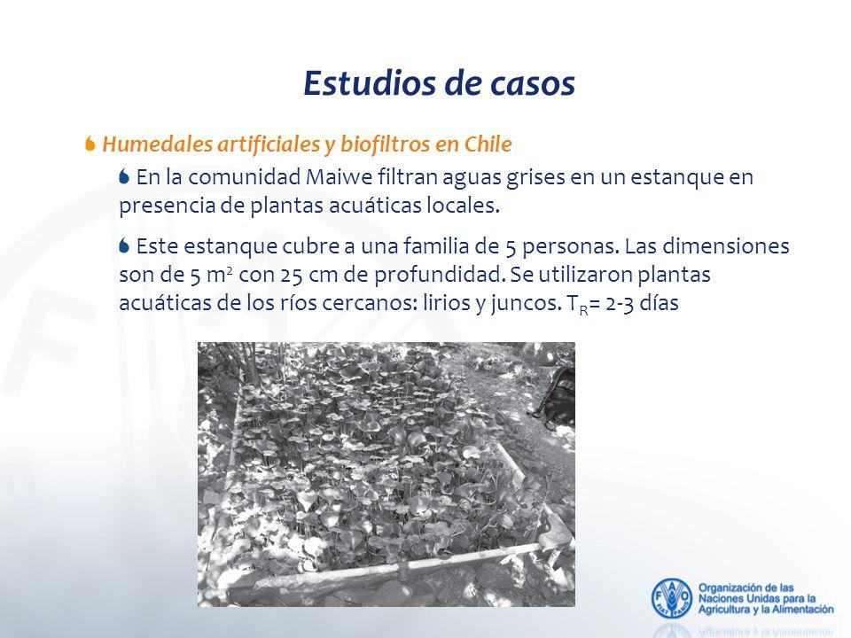 Estudios de casos Humedales artificiales y biofiltros en Chile En la comunidad Maiwe filtran aguas grises en un estanque en presencia de plantas acuáticas locales.