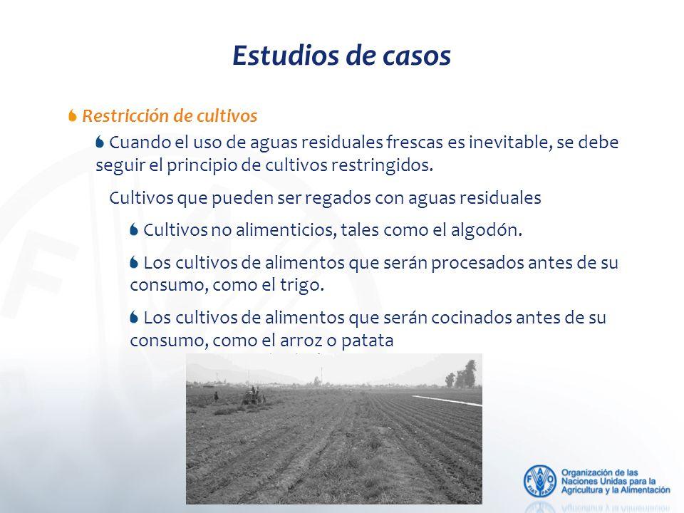 Estudios de casos Restricción de cultivos Cuando el uso de aguas residuales frescas es inevitable, se debe seguir el principio de cultivos restringidos.