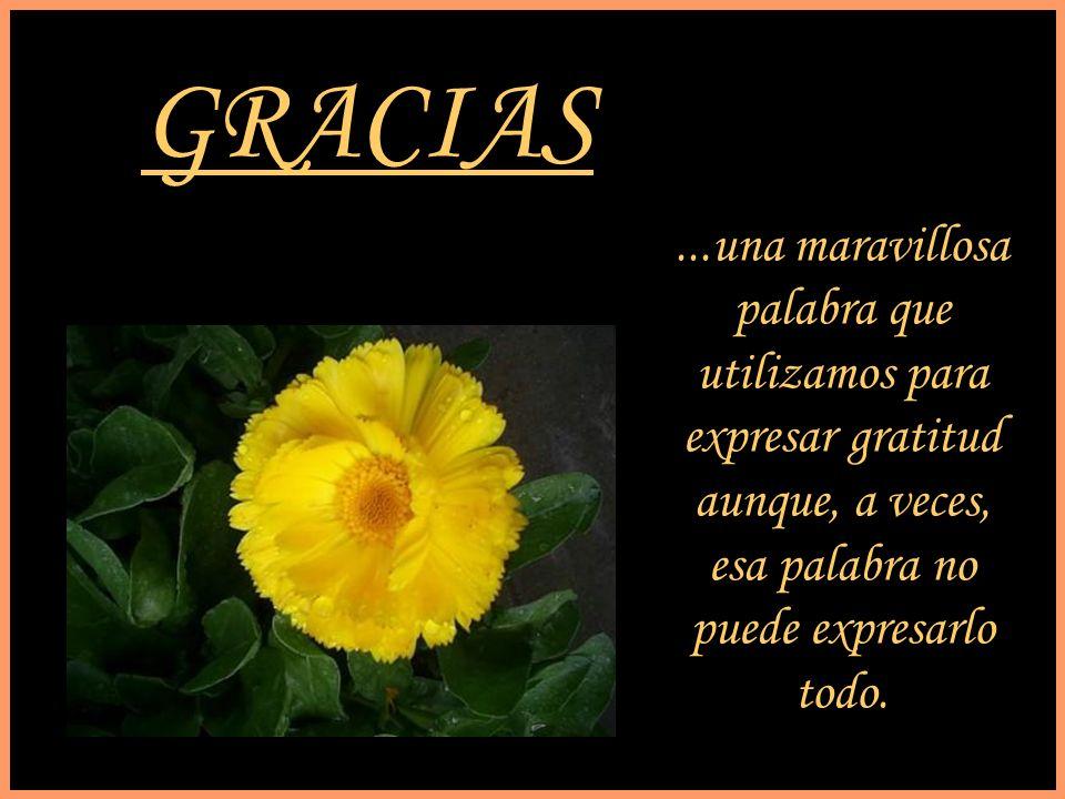 GRACIAS...una maravillosa palabra que utilizamos para expresar gratitud aunque, a veces, esa palabra no puede expresarlo todo.
