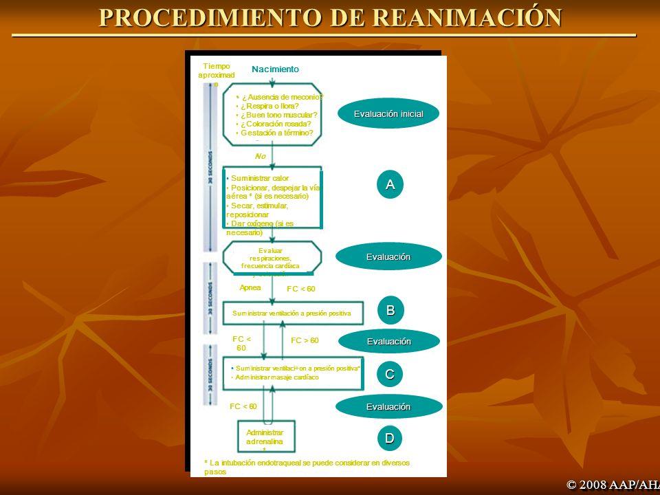 30 seg. LECCION 1 LECCION 1 EVALUACION REANIMACIÓN BÁSICA EVALUACION REANIMACIÓN BÁSICA