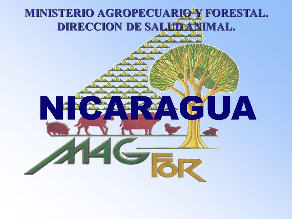 NICARAGUA MINISTERIO AGROPECUARIO Y FORESTAL. DIRECCION DE SALUD ANIMAL.