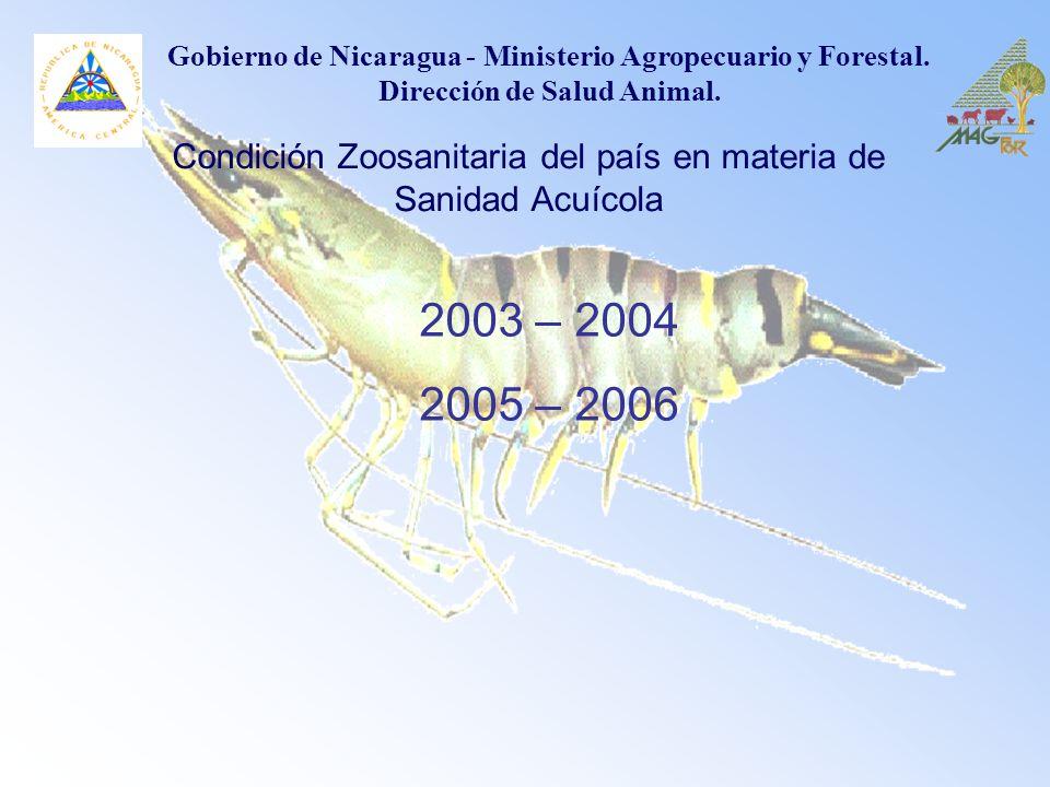 2003 – 2004 2005 – 2006 Condición Zoosanitaria del país en materia de Sanidad Acuícola Gobierno de Nicaragua - Ministerio Agropecuario y Forestal. Dir