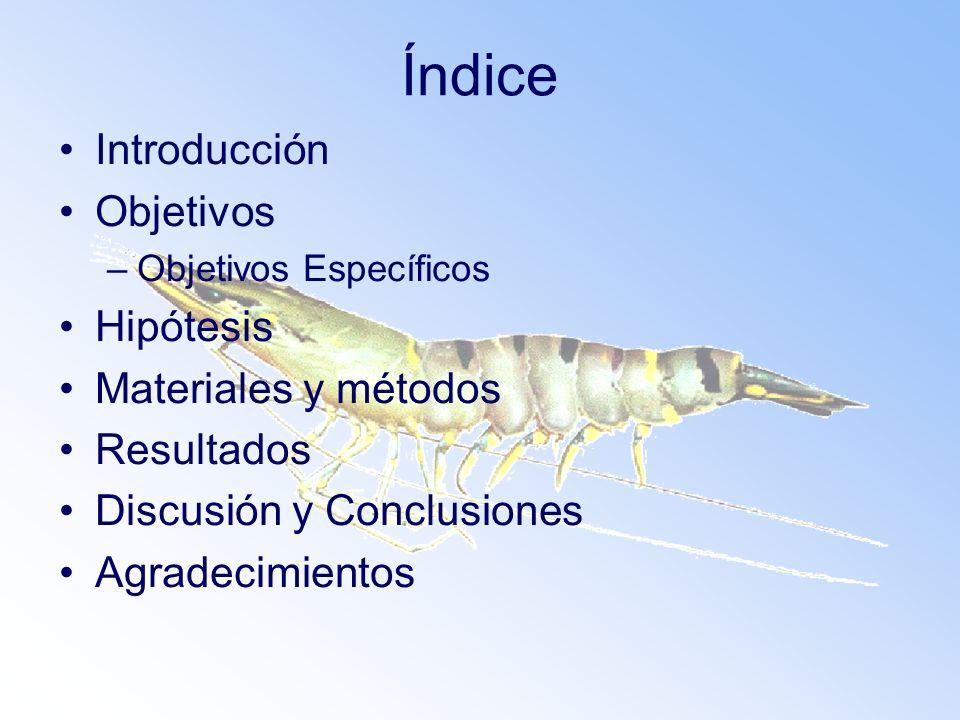 Índice Introducción Objetivos –Objetivos Específicos Hipótesis Materiales y métodos Resultados Discusión y Conclusiones Agradecimientos