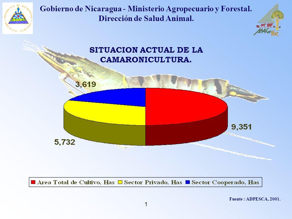 1 Fuente : ADPESCA, 2001. SITUACION ACTUAL DE LA CAMARONICULTURA. Gobierno de Nicaragua - Ministerio Agropecuario y Forestal. Dirección de Salud Anima
