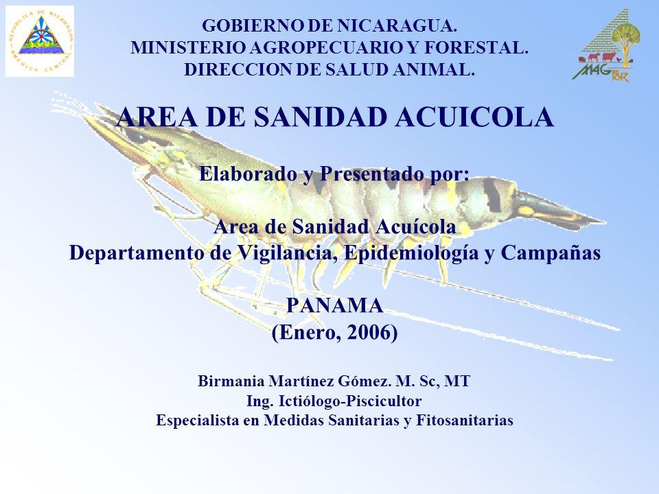 GOBIERNO DE NICARAGUA. MINISTERIO AGROPECUARIO Y FORESTAL. DIRECCION DE SALUD ANIMAL. AREA DE SANIDAD ACUICOLA Elaborado y Presentado por: Area de San