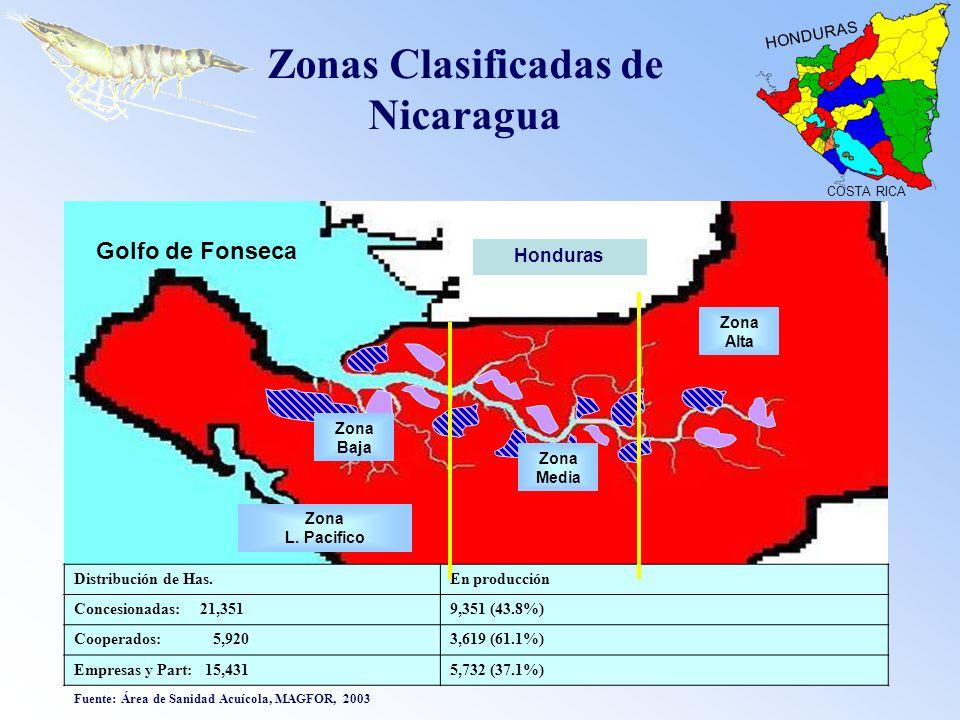 Zona Baja Zona Media Zona Alta Honduras Distribución de Has.En producción Concesionadas: 21,3519,351 (43.8%) Cooperados: 5,9203,619 (61.1%) Empresas y