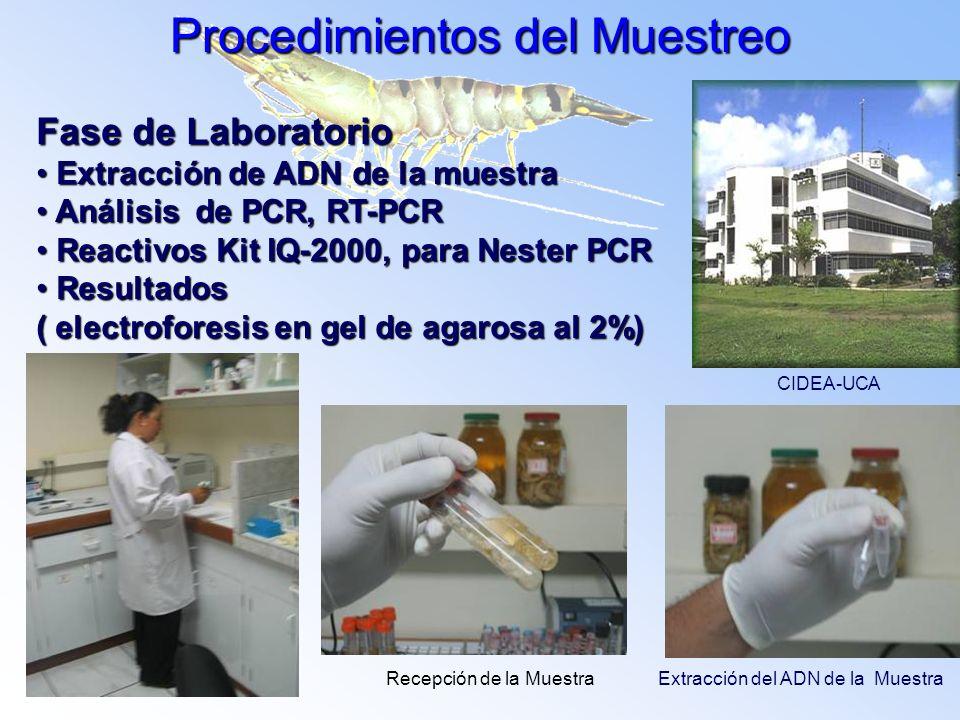 Fase de Laboratorio Extracción de ADN de la muestra Extracción de ADN de la muestra Análisis de PCR, RT-PCR Análisis de PCR, RT-PCR Reactivos Kit IQ-2