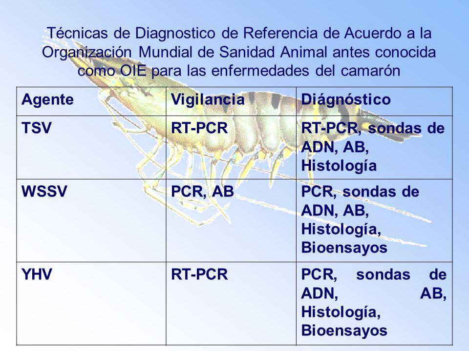 Técnicas de Diagnostico de Referencia de Acuerdo a la Organización Mundial de Sanidad Animal antes conocida como OIE para las enfermedades del camarón