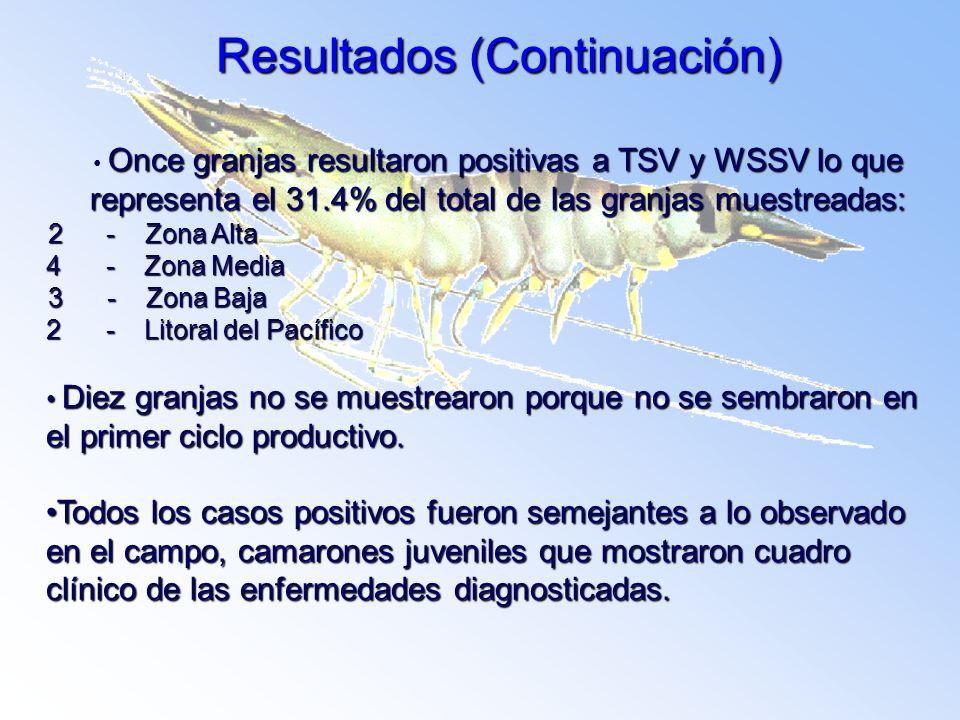 Resultados (Continuación) Once granjas resultaron positivas a TSV y WSSV lo que representa el 31.4% del total de las granjas muestreadas: 2 - Zona Alt