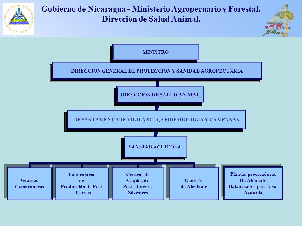 1 Gobierno de Nicaragua - Ministerio Agropecuario y Forestal. Dirección de Salud Animal. DIRECCION DE SALUD ANIMAL Plantas procesadoras De Alimento Ba