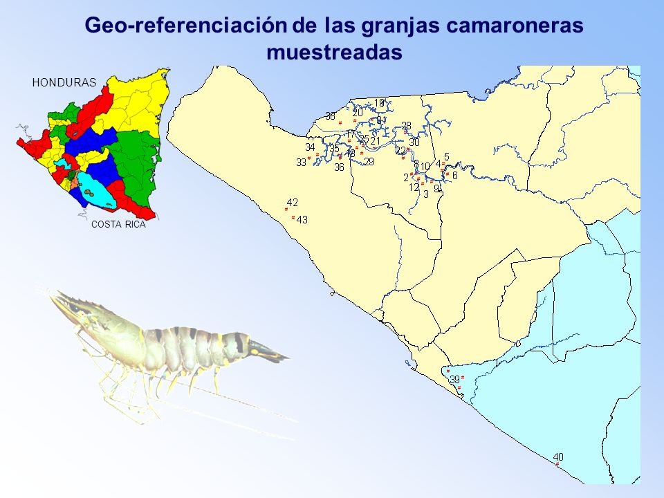 Geo-referenciación de las granjas camaroneras muestreadas HONDURAS COSTA RICA