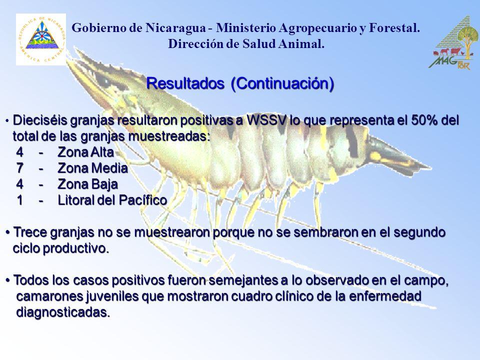 Resultados (Continuación) Dieciséis granjas resultaron positivas a WSSV lo que representa el 50% del total de las granjas muestreadas: total de las gr