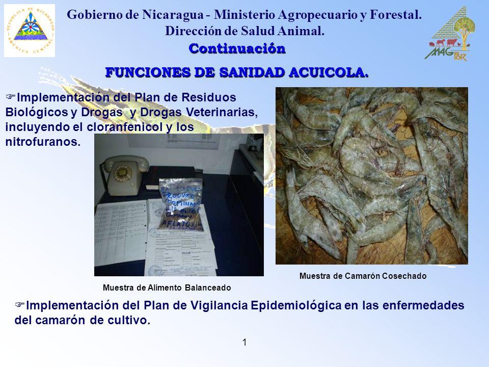 1 Continuación FUNCIONES DE SANIDAD ACUICOLA. Gobierno de Nicaragua - Ministerio Agropecuario y Forestal. Dirección de Salud Animal. Implementación de