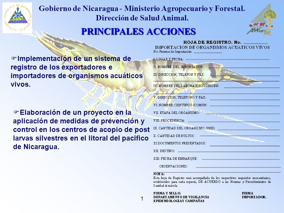 1 PRINCIPALES ACCIONES Gobierno de Nicaragua - Ministerio Agropecuario y Forestal. Dirección de Salud Animal. Elaboración de un proyecto en la aplicac