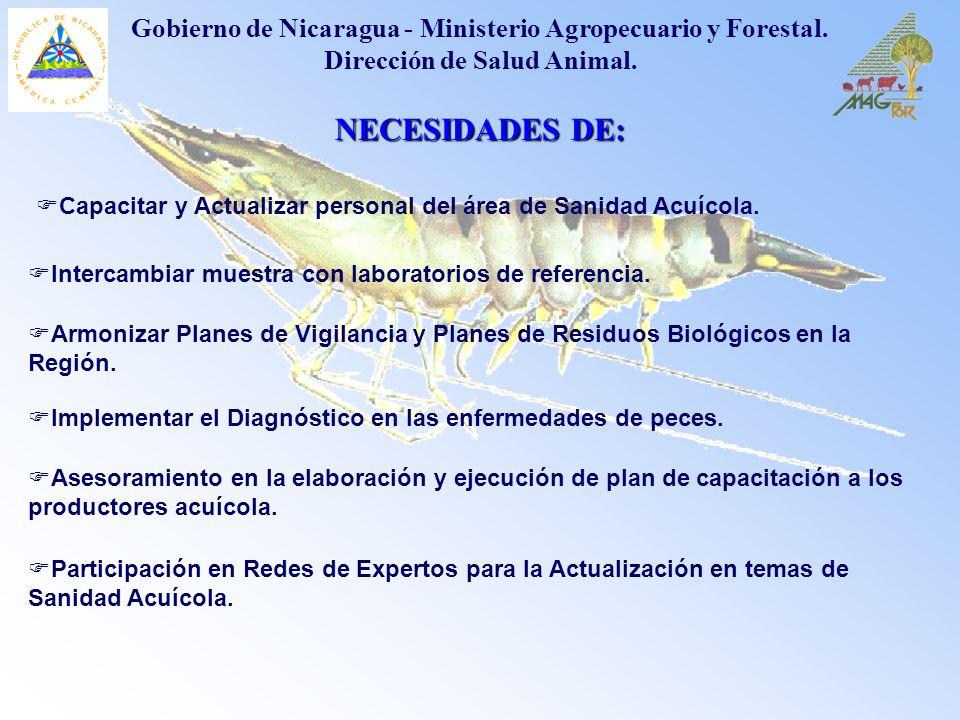 NECESIDADES DE: Implementar el Diagnóstico en las enfermedades de peces. Gobierno de Nicaragua - Ministerio Agropecuario y Forestal. Dirección de Salu